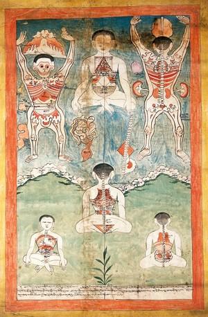 view Anatomical figures. Gouache.
