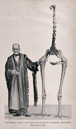 view Richard Owen standing next to the skeleton of the Dinornis maximus (the extinct  New Zealand moa). Halftone after J. Smit after a photograph.