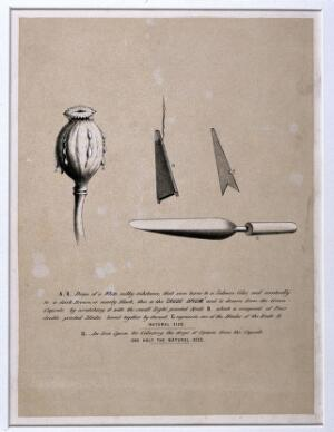 view A poppy capsule oozing drops of crude opium and tools for its extraction. Lithograph.
