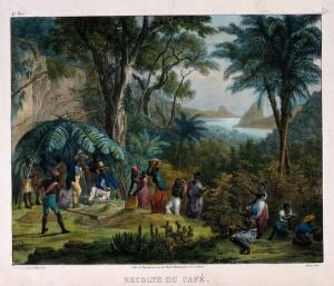 view Indian workers harvesting the crop on a coffee plantation. Coloured lithograph by Deroi, c. 1850, after J. M. Rugendas.