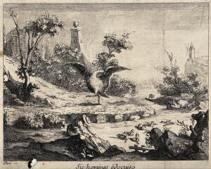 view A swan cleaning itself as an example to man. Engraving after Chev'.(?).