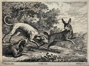 view A hare is bitten by a dog in its hind leg while another dog is growling at it. Etching by J. Griffier after F. Barlow.
