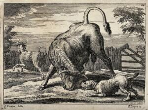 view A bull and a bulldog are about to attack each other in an enclosure while another bull is running away. Etching by F. Barlow.