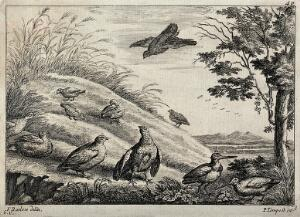 view A group of fowl and birds resting and feeding at the bottom of a mound. Etching by F. Barlow.