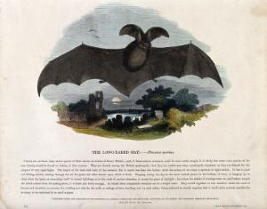view A long-eared bat flying over a churchyard. Coloured wood engraving by J. W. Whimper.