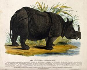 view A rhinoceros standing on the shore of a lake. Coloured wood engraving by J. W. Whimper.