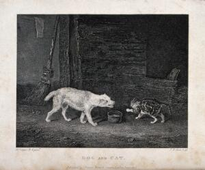 view A cat hissing at a barking dog over a bowl of milk in a barn. Etching by J. R. Scott after A. Cooper.