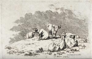 view A herd of cows resting on a meadow. Etching.
