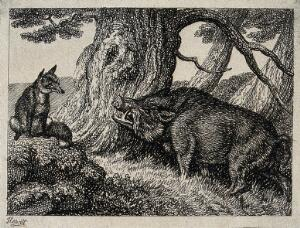 view A wild boar chafing its neck against a tree while a fox seated on a rock nearby watches on. Etching by W. S. Howitt.