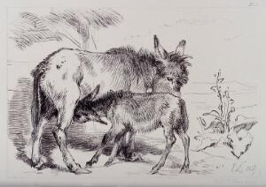 view A donkey licking its foal while it is feeding. Etching by C. Lewis after E. H. Landseer.