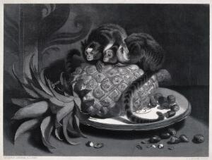view Two monkeys sitting on a pineapple in a fruit bowl are attentively watching a wasp on the fruit stalk. Steel engraving by T. Landseer after E. H. Landseer.