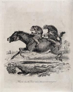 view Two monkey jockeys are riding a terrified donkey. Etching by T. Landseer after himself.
