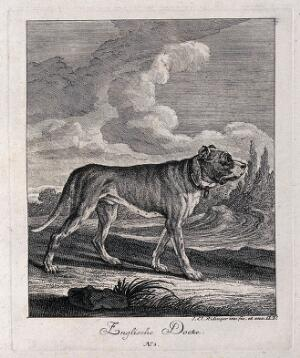 view English mastiff standing in a field with a forest in the background. Etching by J. E. Ridinger.