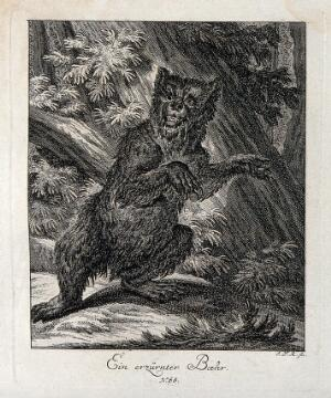 view An enraged bear standing on its hind feet in a forest. Etching by J. E. Ridinger.