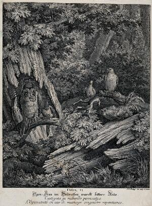 view A magpie and an owl are sitting on a branch in a forest, tied to each other with a string, while a capercaillie, a bird of prey and a pidgeon are looking at the odd couple in disbelief. Etching by J. E. Ridinger.