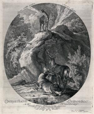 view A hind standing on a crag in the forest belling with a group of stags and deer resting on patch of grass below. Etching by J. E. Ridinger.