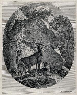 view A stag, a buck and a hind before a huge rock in the forest. Etching by J. E. Ridinger.