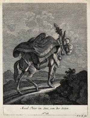 view A muzzled, harnessed and loaded mule walking up a rocky path, seen from the side. Etching by J. E. Ridinger.