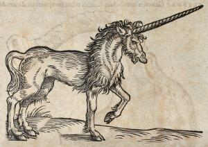 view A unicorn. Woodcut after C. Gessner.