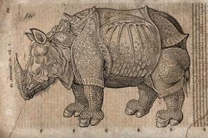 view A rhinoceros. Woodcut after A. Dürer.