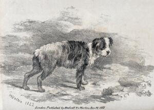 view A young sheepdog standing in a mountainous landscape. Chalk lithograph by H. Walter.