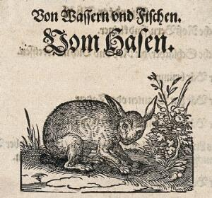 view A hare sitting on the ground about to dig in the soil. Woodcut.