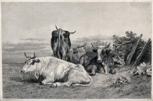 view Four cows resting in a field. Etching by Beyer after R. Bonheur.