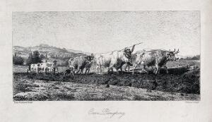 view A team of oxen being made to pull a plough. Engraving by P. Moran after R. Bonheur.