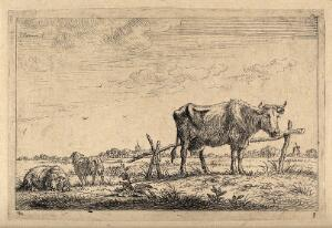 view A cow and two sheep in a field. Etching by J. Janson the elder, 17--.