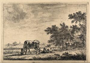 view Cows grazing and resting in a field. Etching by J. Janson, the elder.