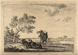 view Cows standing and lying in a field. Etching by J. Janson, the elder.