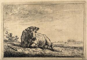 view A cow at rest lying in a field. Etching by J. Janson, the elder.