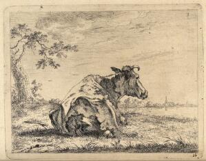 view A cow at rest lying in a field. Etching, possibly by J. Janson, the elder.
