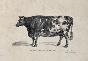 view A short horned cow. Lithograph by J. Ward, ca 1824.