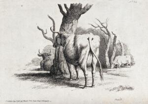 view Cows resting and grazing under some trees. Etching by W.-S. Howitt, ca 1801.