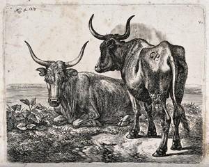 view Two Polish oxen by a river or lake. Etching by J.A. Klein, 1818.