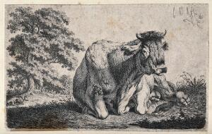 view A cow lying in a field. Etching by C.-W. Kolbe, the elder, ca 1835.