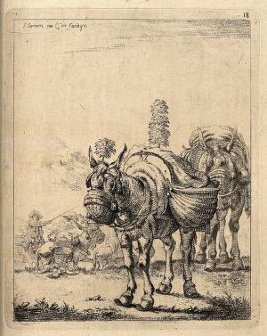view A procession of travelling donkeys with saddle-bags and nose-bags. Lithograph after J. Janson, the elder.