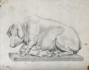 view A statue of a hog with litter of suckling piglets. Pencil drawing by W. Ottley.