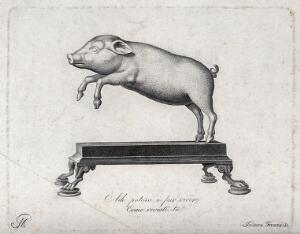 view The statue of a lively, leaping pig. Engraving by I. Frezza.