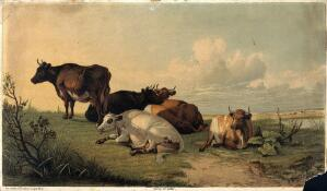 view Cattle resting in open landscape. Colour reproduction of a painting by T. S. Cooper, 1872.