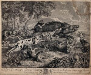 view A pack of dogs is attacking and running after wild boar. Etching by F. Joullain after A. F. Desportes after F. Snyders.