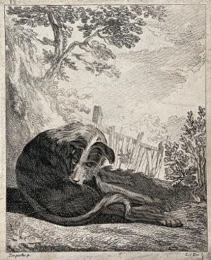 view A dog sitting on a meadow licking and cleaning itself. Etching by A. F. Le Bas after J. P. Desportes.