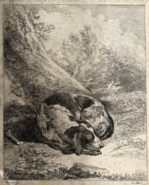 view A dog curled up and asleep under a tree. Etching by A. F. Le Bas after J. P. Desportes.