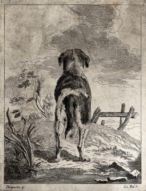 view A dog seen from behind looking up to the clouds. Etching by A. F. Le Bas after J. P. Desportes.