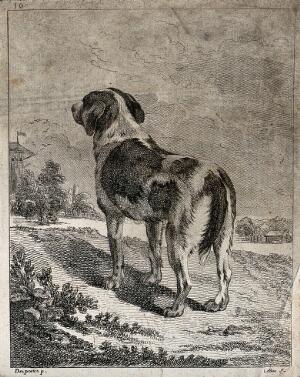 view A dog seen from behind looking a t a village in the distance. Etching by A. F. Le Bas after J. P. Desportes.