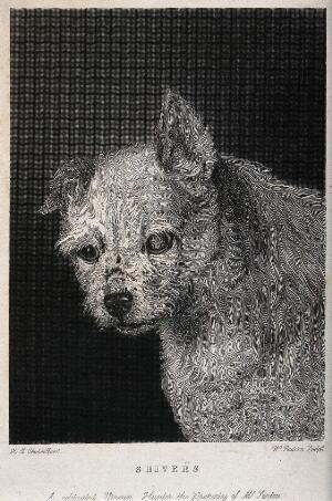 """view Head of a vermin-hunting dog called """"Shivers"""". Etching by W. Raddon after H. B. Chalon."""