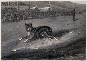 view A dog running along a race-course with a crowd looking on. Etching by E. Hacker after E. Corbet.