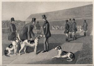 view Men in top hats releasing their dogs from the kennels and preparing them for a race. Etching by E. Hacker after E. Corbet.
