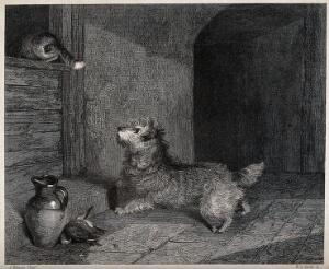 view A dog chasing a cat through a window. Etching by W. R. Smith after J. Pitman.